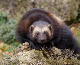 Тысячи видов животных находятся под угрозой исчезновения: защитники природы бьют тревогу