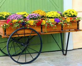 Самые красивые осенние цветы и советы по уходу за растениями