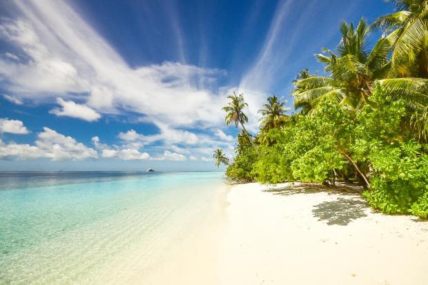 Зеленый остров в океане