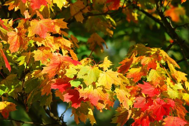красные и желтые листья на деревьях в осеннем лесу