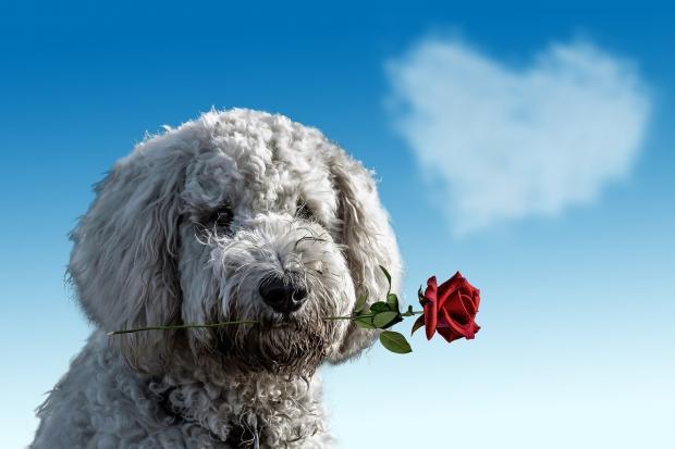 собака с цветком в зубах