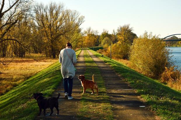 девушка гуляет около реки с двумя собаками