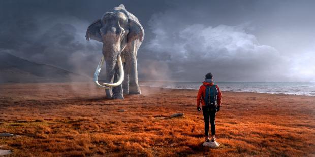 парень стоит напротив огромного слона