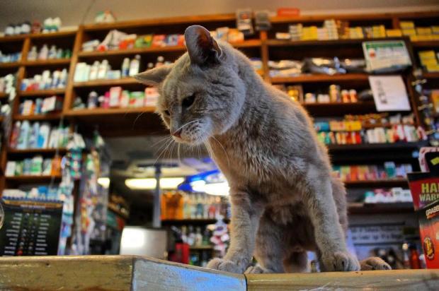 кот Стаббс - многолетний мэр местности на Аляске