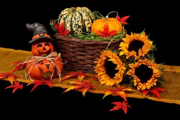 урожай в корзине на Хэллоуин -  тыквы с подсолнухами