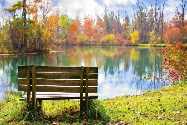 деревянная скамейка стоит на берегу озера в окружении осеннего леса