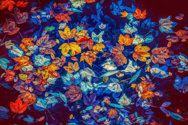 разноцветные осенние листья лежат на поверхности синей воды