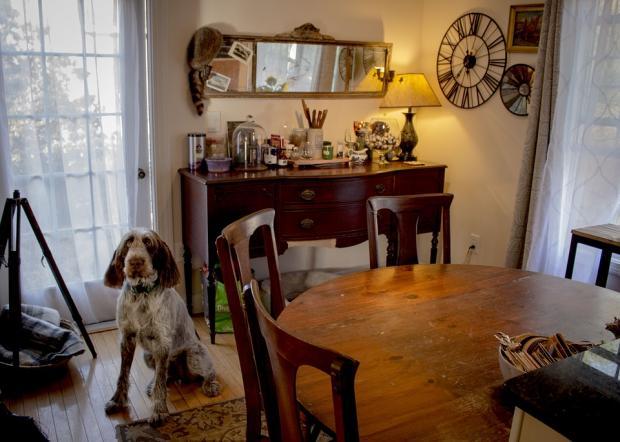 интерьер комнаты с собакой