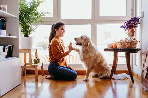 девушка играет с собакой