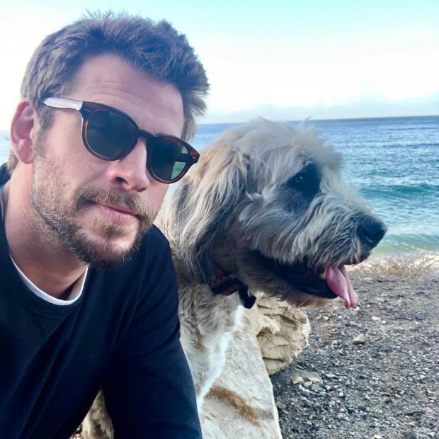 Лиам Хемсворт с собакой
