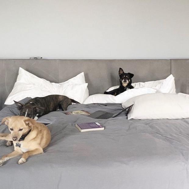Собаки Арианы Гранде