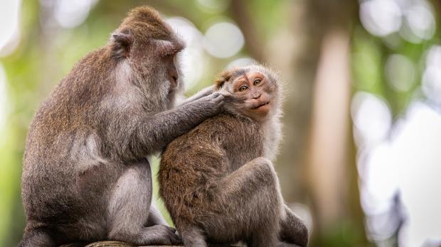 две обезьяны на дереве