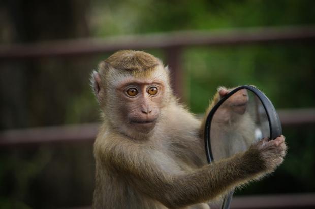 обезьяна с зеркалом