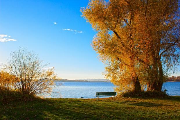 скамейка стоит на берегу озера под высоким деревом с пожелтевшими листьями