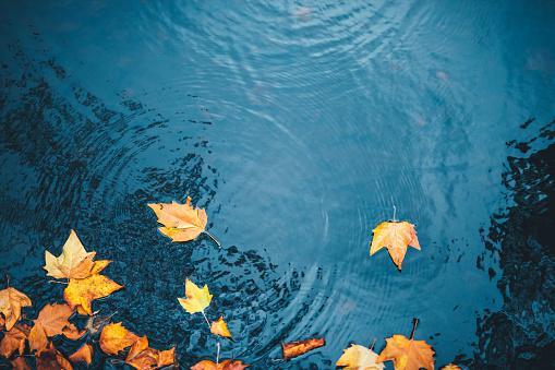 по синей воде плывут разноцветные осенние листья