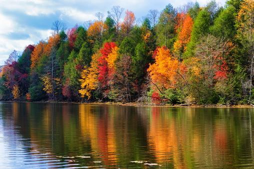 красивый яркий разноцветный осенний лес на берегу синей реки