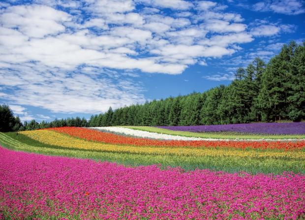 поле с разноцветными цветами