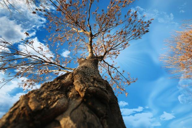 осеннее дерево на фоне неба