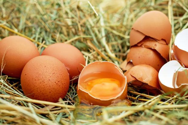 яйца на сене, разбитое яйцо и скорлупа