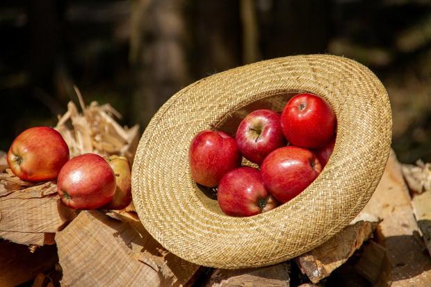яблоки в соломенной шляпе лежат на поленнице с дровами