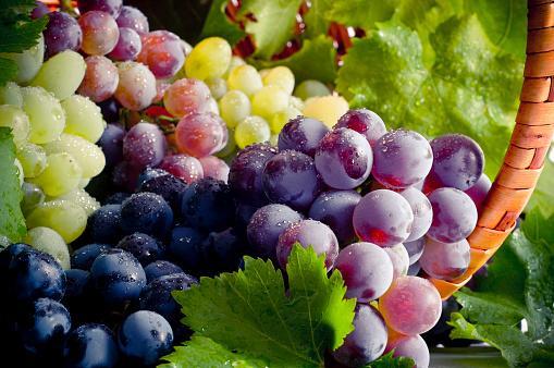 грозди зрелого винограда лежат в корзинке