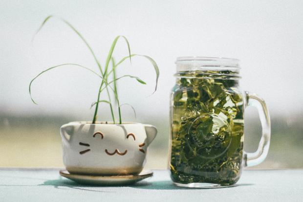 Зеленый чай в банке и горшок с цветком