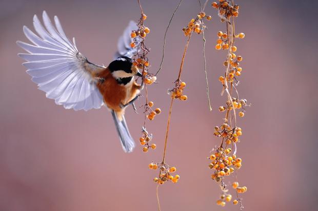 птичка подлетает к веточке