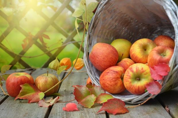 яблоки в опрокинутой корзинке на дощатом столе
