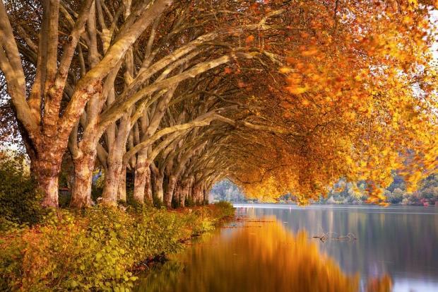склоненные над озером ветви осеннего дерева