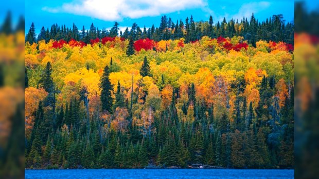 разноцветный осенний лес на берегу синей реки