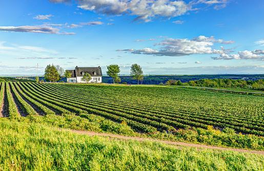 пейзаж с зеленым полем и голубым небом с белым домиком у горизонта