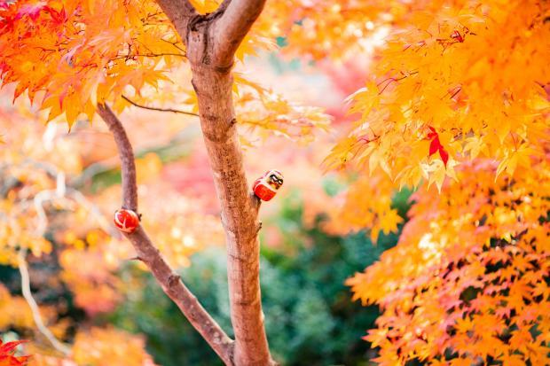 Деревья с желтыми листьями