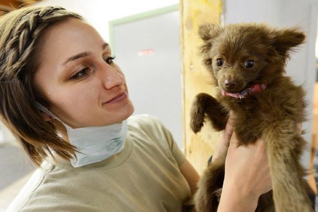 девушка-ветеринар держат в руках маленького коричневого щенка