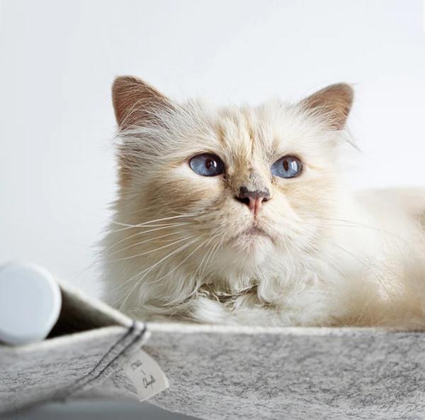 Красивая кошка Карла