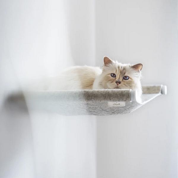 Кошка отдыхает в гамаке
