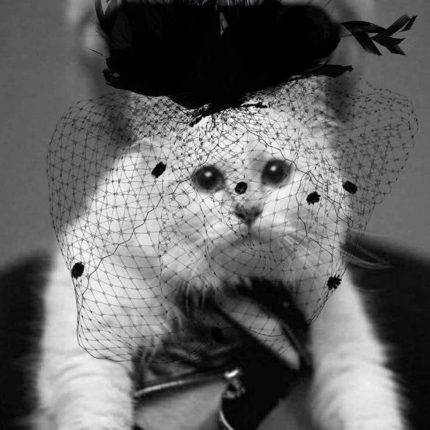 Кошка в черной шляпке