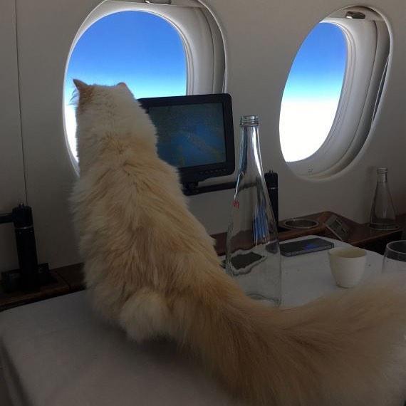 Кошка летит в частном самолете