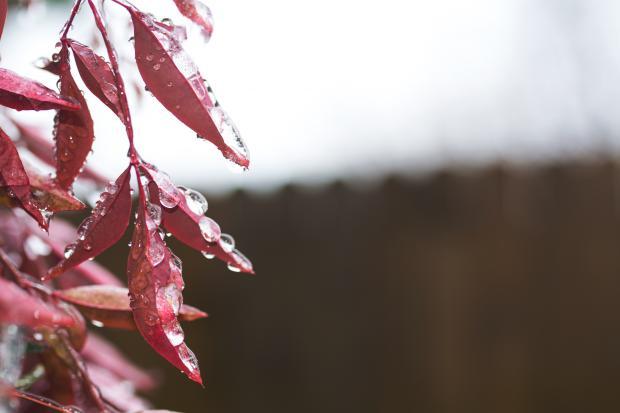 Осенние листья в каплях дождя