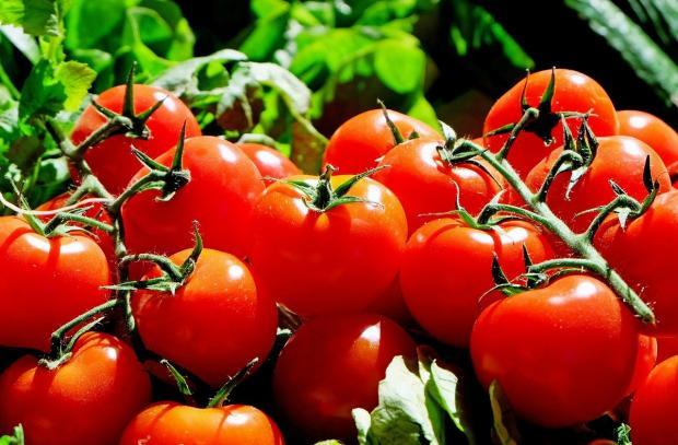 спелые помидоры на веточках