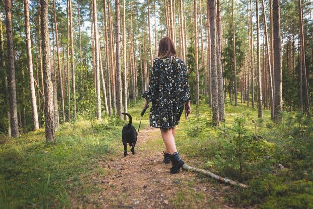 прогулка с собакой в осеннем лесу