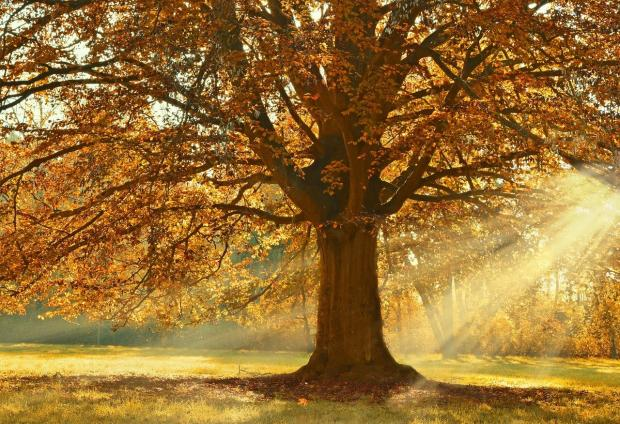 красивое дерево осенью