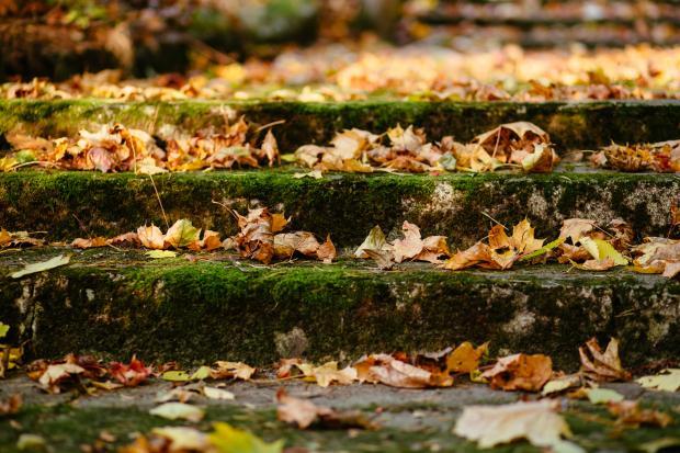 Ступеньки покрытые мхом и желтыми листьями