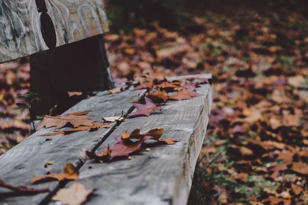 на голой деревянной скамейке лежат засохшие осенние лиситья