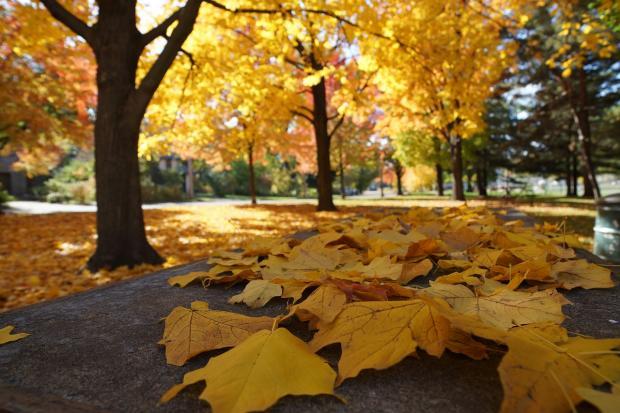 большие желтые осенние листья лежат на асфальте