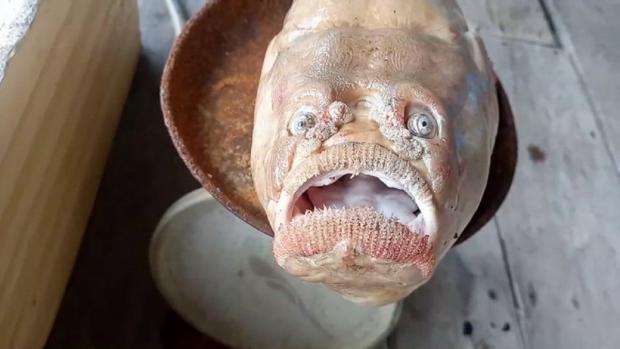 странная рыба