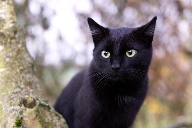 черная кошка сидит на дереве
