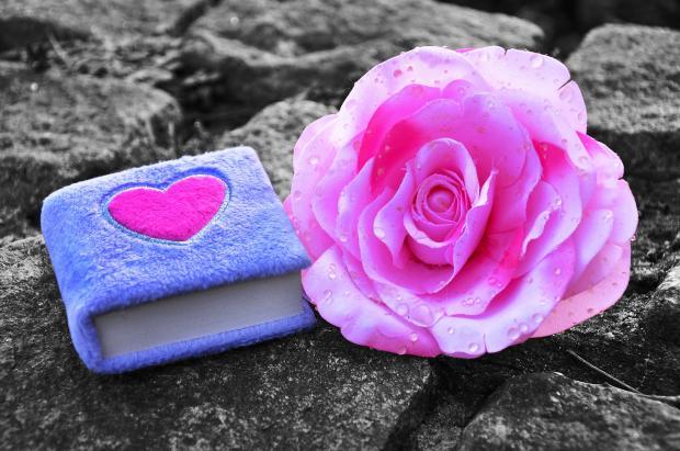 на камнях лежит голубой пушистый блокнот и красный цветок