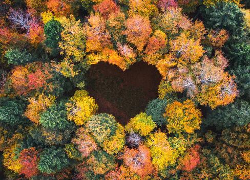 просвет в виде сердца среди осеннего леса