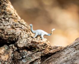 Останки доисторического животного найдены детьми на Дальнем Востоке