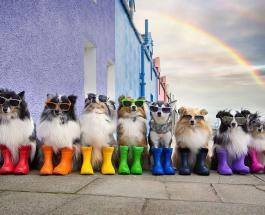Хозяйка 8 собак делает креативные фото со своими очаровательными питомцами